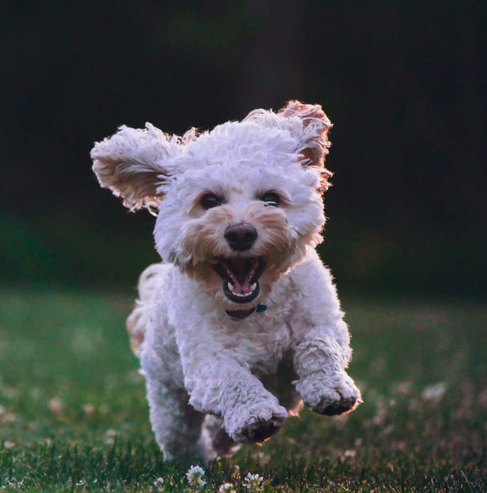 doggie playtime saddleworth